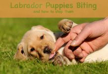 Find out how to stop a puppy from biting you and start enjoying him again.