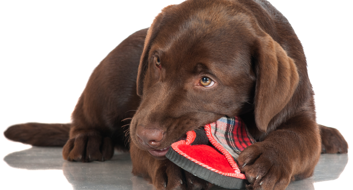 Indestructible Dog Toys For Labs