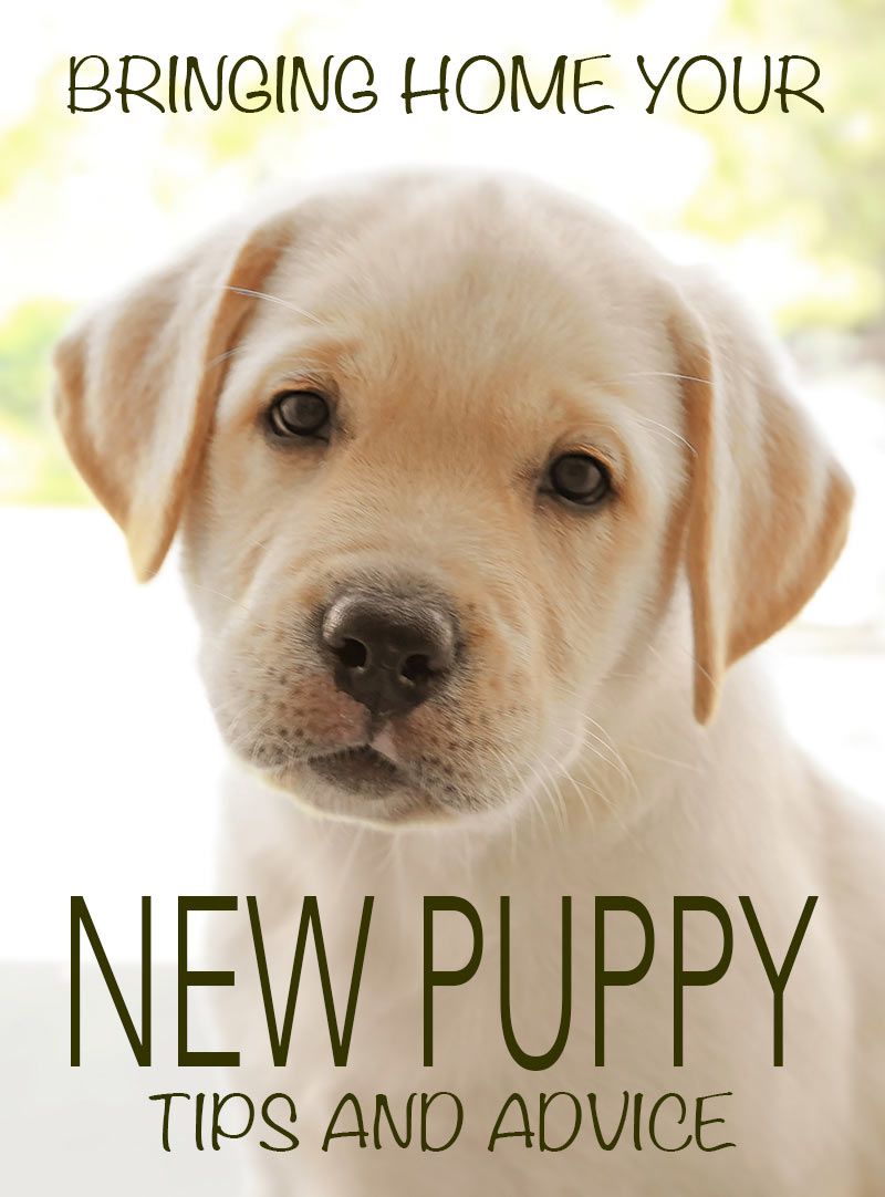 Your guide to bringing home a new puppy and the first few nights