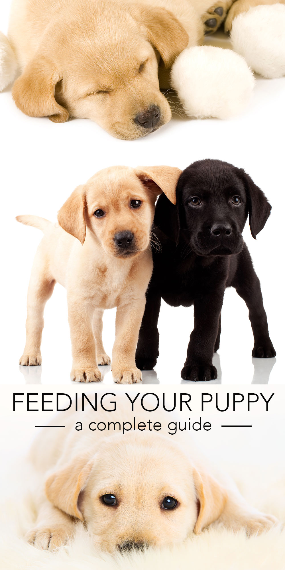 Best Dog Food Labrador