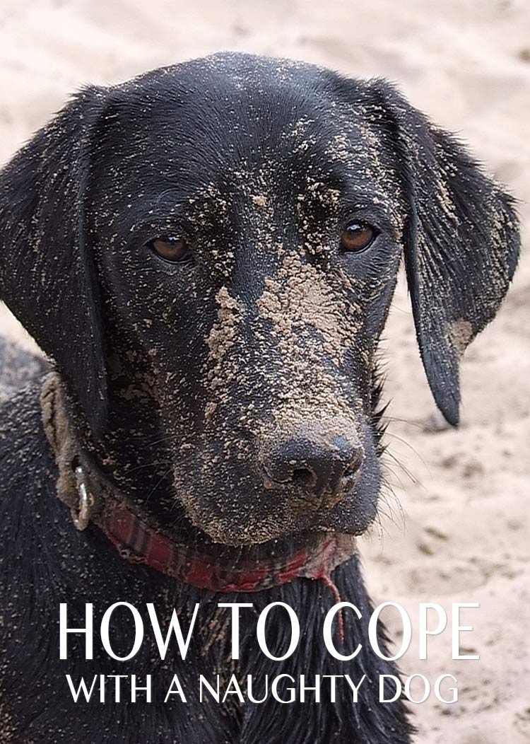 How to cope with a naughty dog