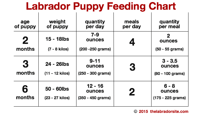 Feeding your labrador puppy full guide and diet chart puppy feeding chart ccuart Image collections