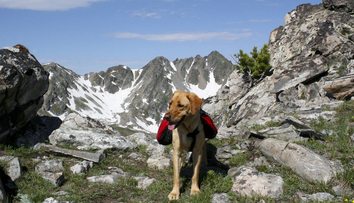Best Hiking And Parks Around  For Dogs