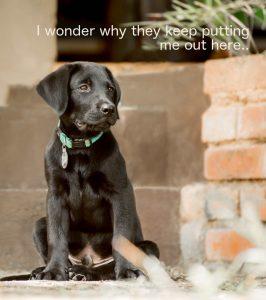 labrador puppy sitting on steps