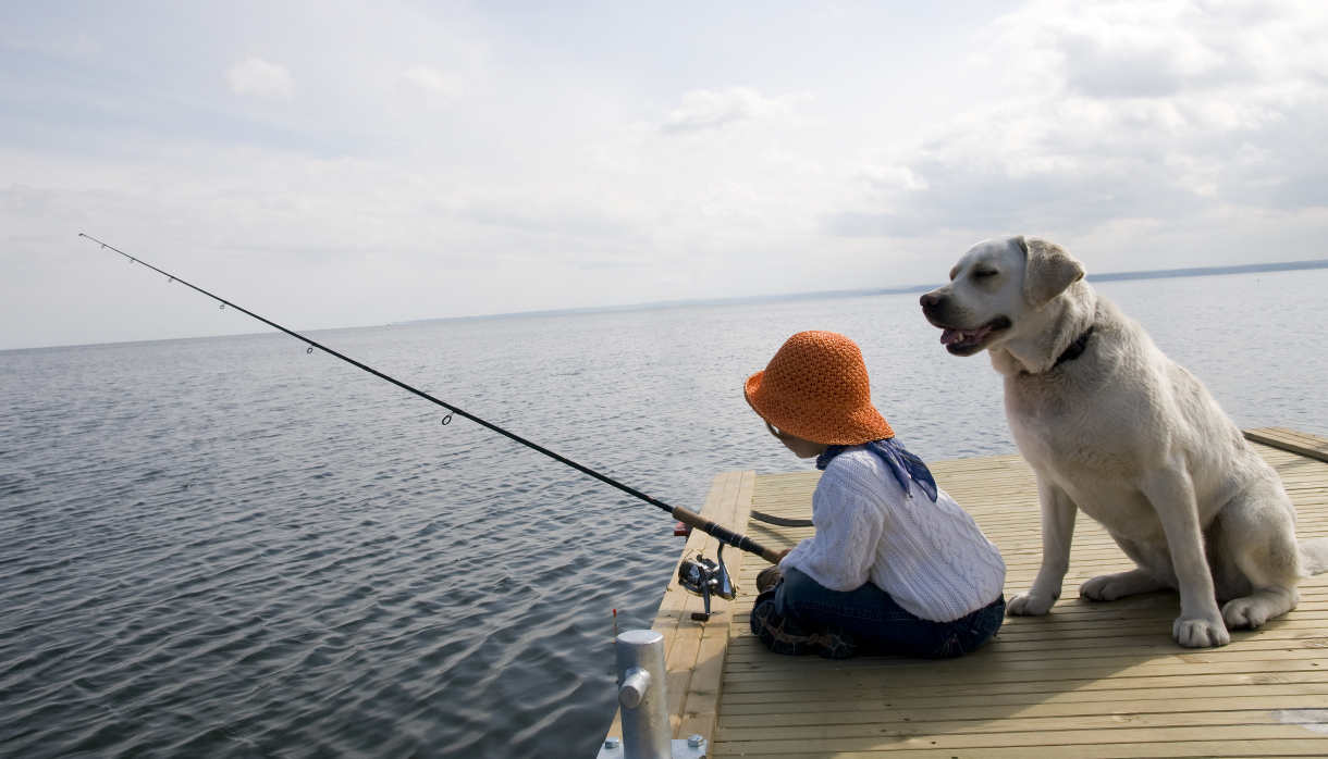Dog training stages the labrador site for Fish for dogs