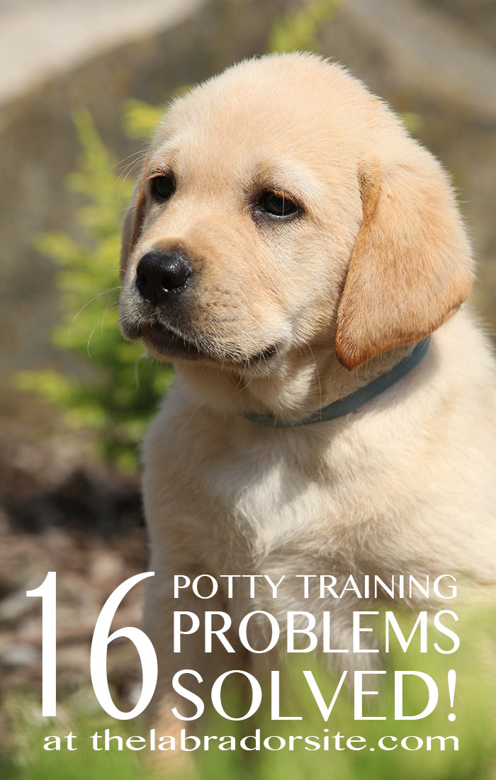 Answers to all your puppy potty training problems!