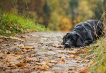 use of punishment in training labradors