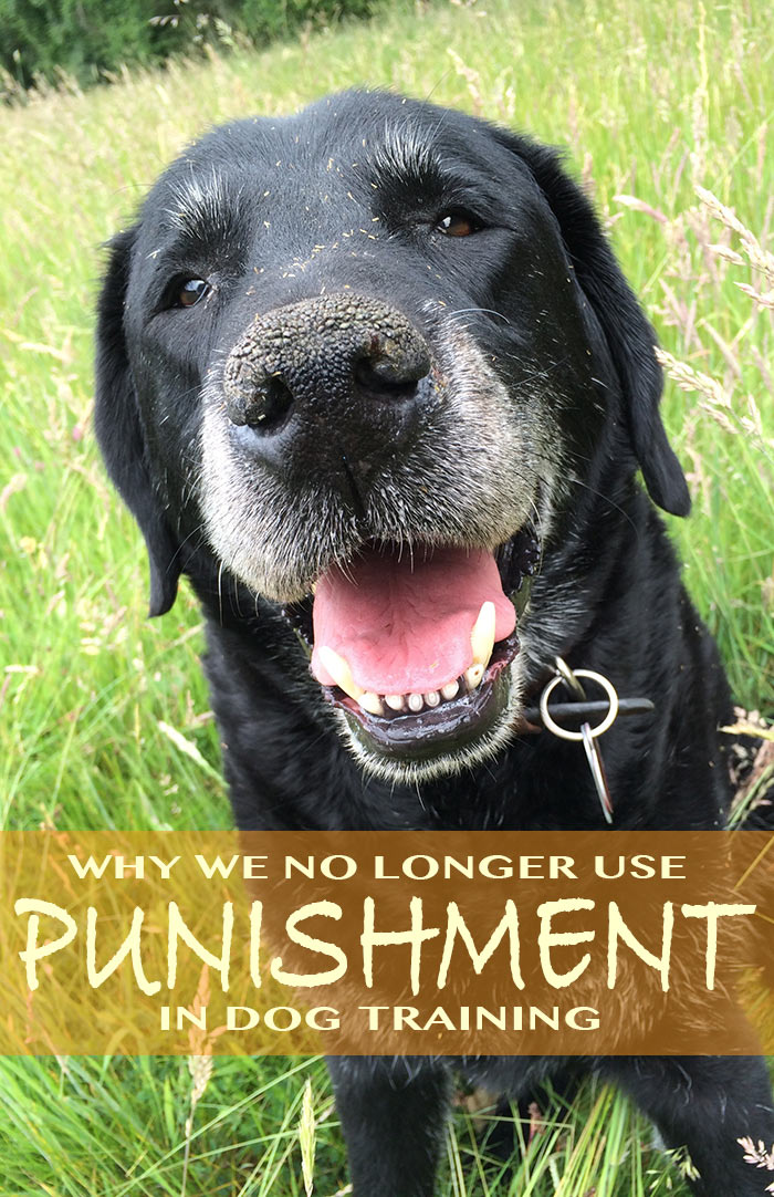 The use of punishment in dog training is on the decline, we look at how this affects all dogs and influences dog obedience standards.