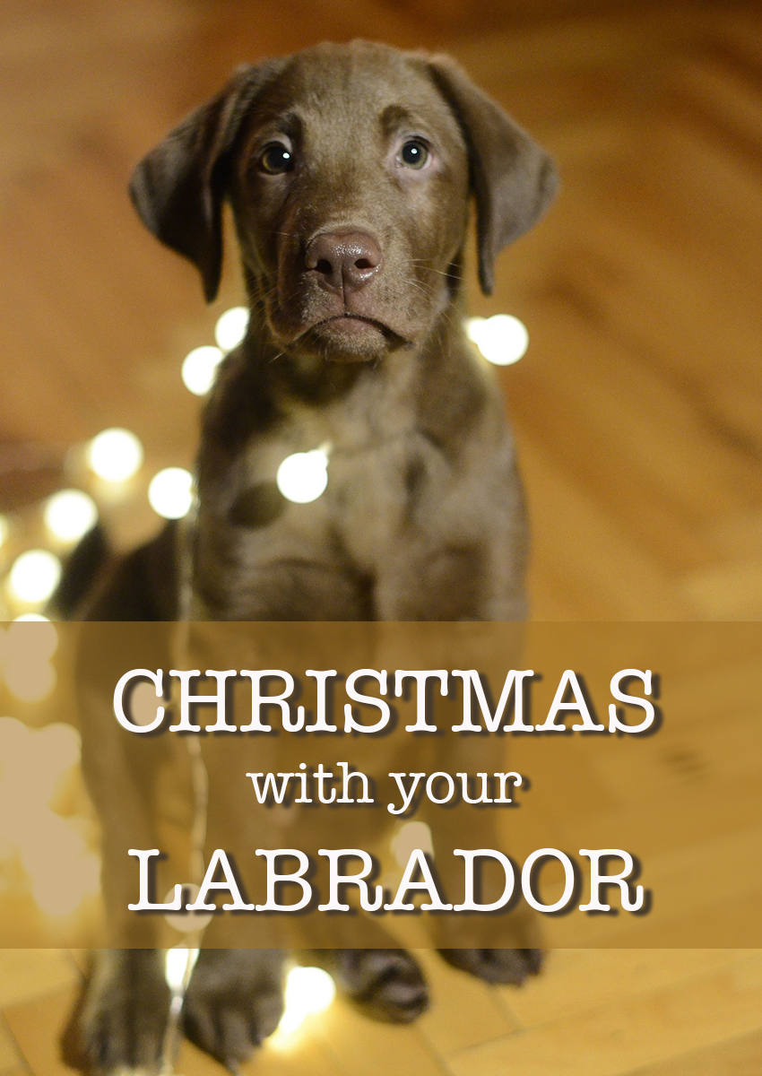 Fantastic ideas for theming your Christmas, with Labrador cards, decorations and gifts