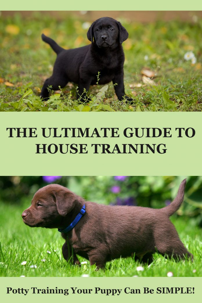 House training your labrador puppy for Dog potty training problems