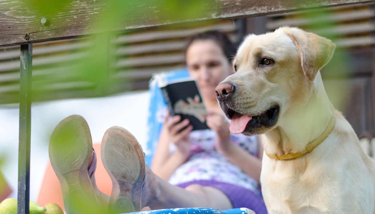 Best Dog Food For Labs >> Labrador Food And How To Feed a Labrador - A Complete Guide