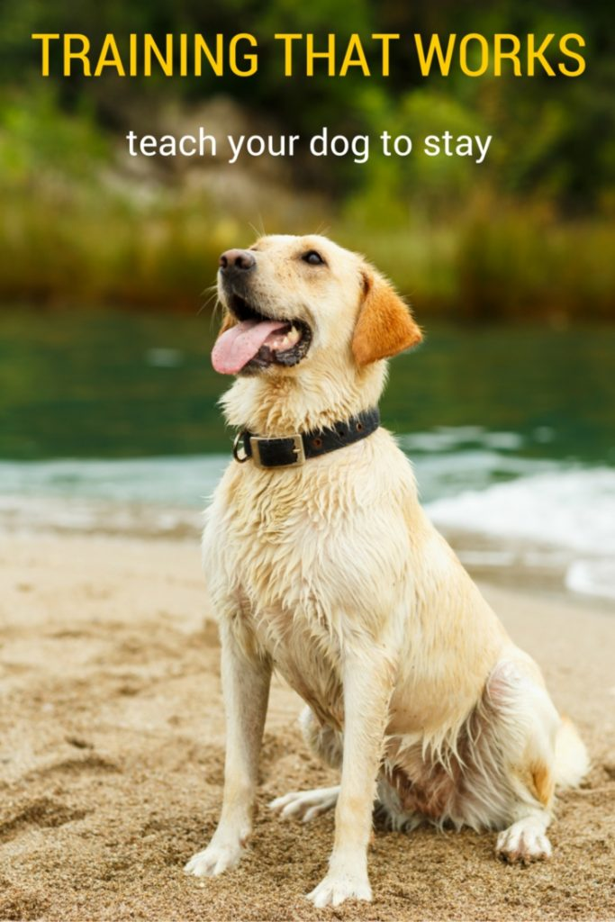 How to teach a dog to stay - a complete dog training guide