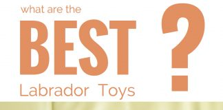 The best dog toys for large breeds like Labradors
