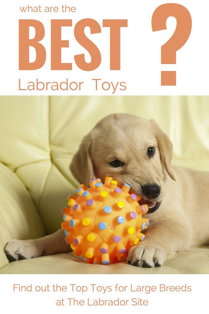 Best Dog Toys For Large Breeds