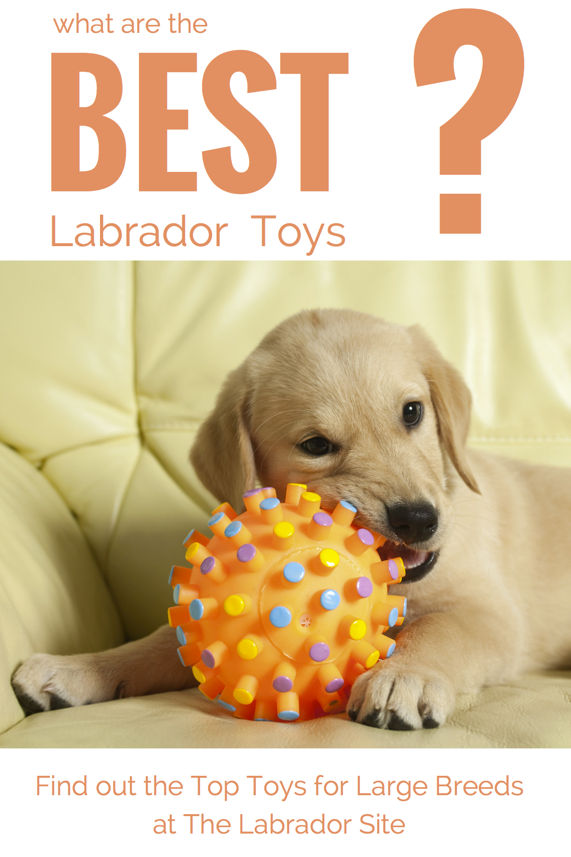Best Dog Toys For Breeds