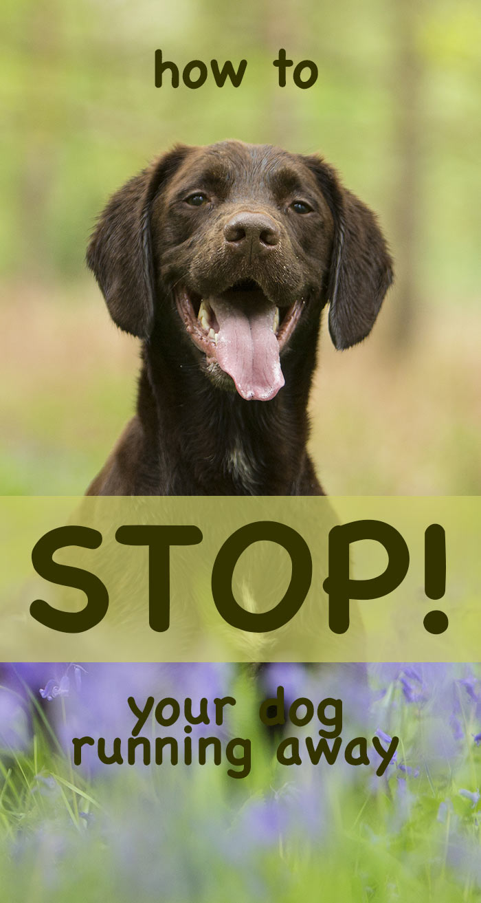 stop-dog-running-away