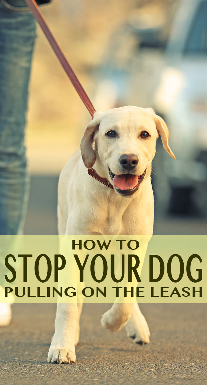 How To Stop Dog From Pulling On Leash While Walking