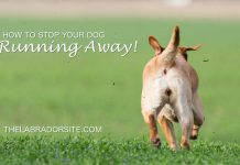 how to stop your dog running away