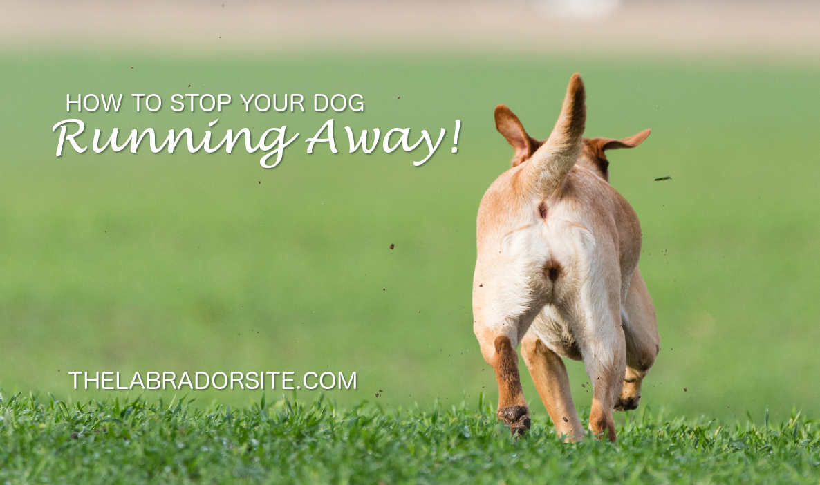 How to stop dogs running away