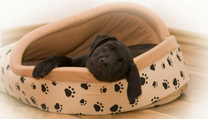 Best Dog Beds For Large Breeds