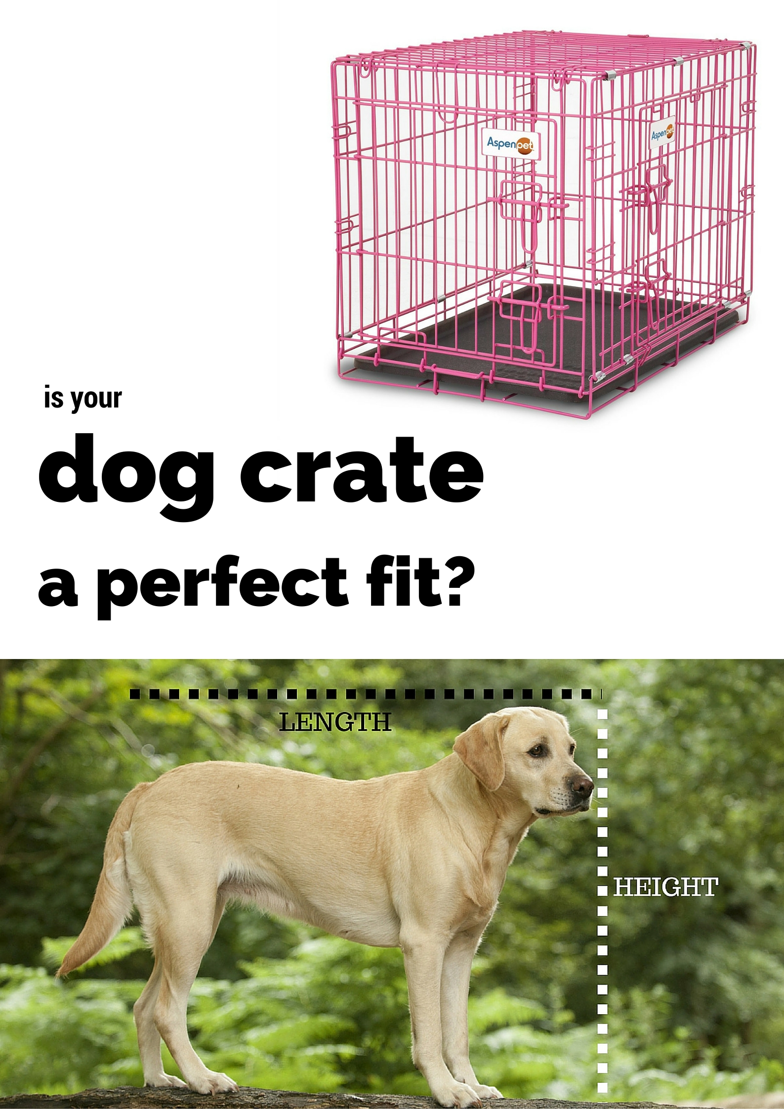 Best Dog Crates and Playpens for Labradors or Breeds