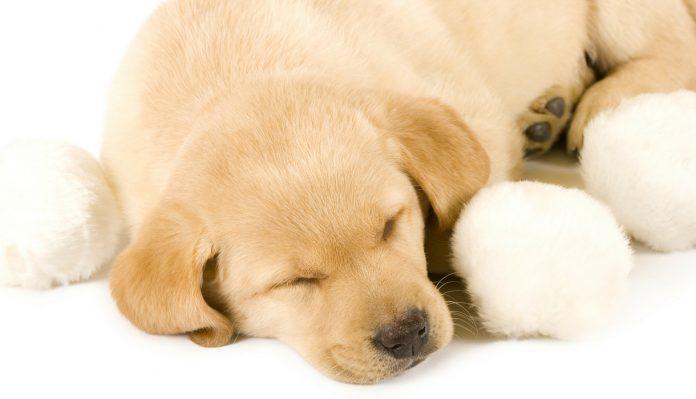how many hours a day do dogs sleep?