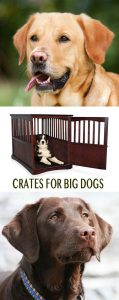 help with finding and choosing the best crates or cages for Labradors and other larger dog breeds