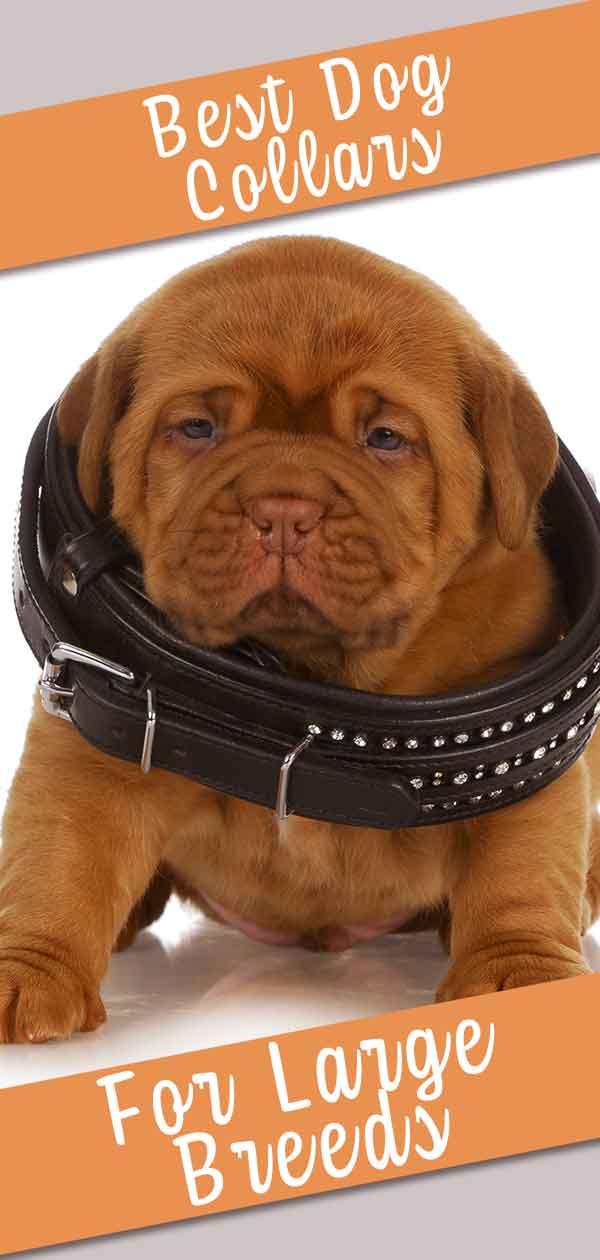 large dog collars