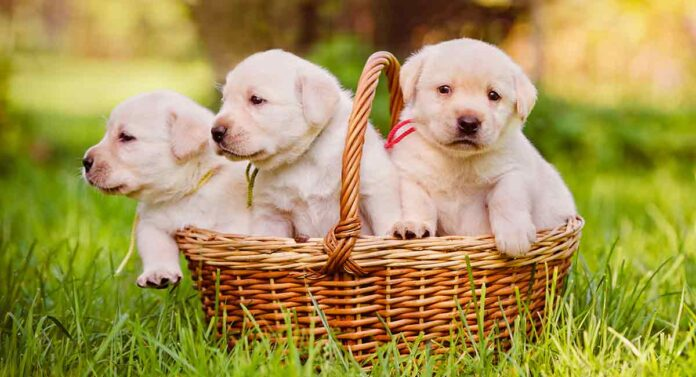 Puppy supplies