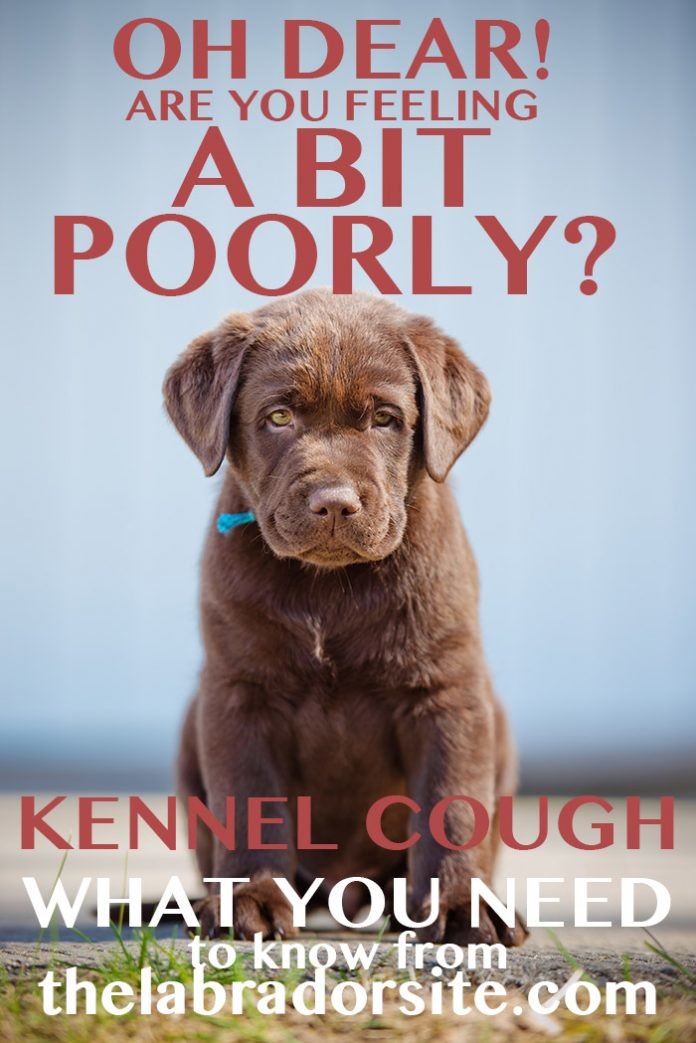 kennel cough symptoms, treatment and care