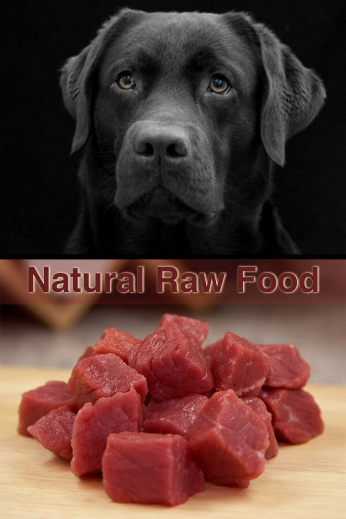 A complete guide to providing a natural diet or raw dog food to Labradors and other medium and large breed dogs