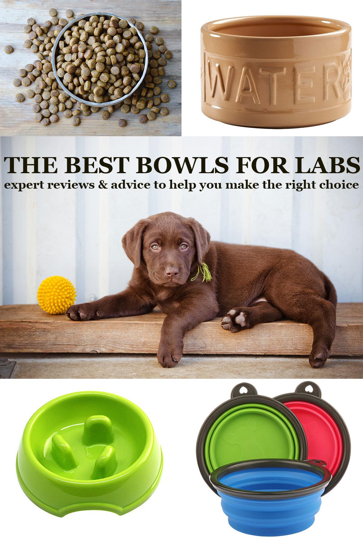 bestbowl - Dog Bowls