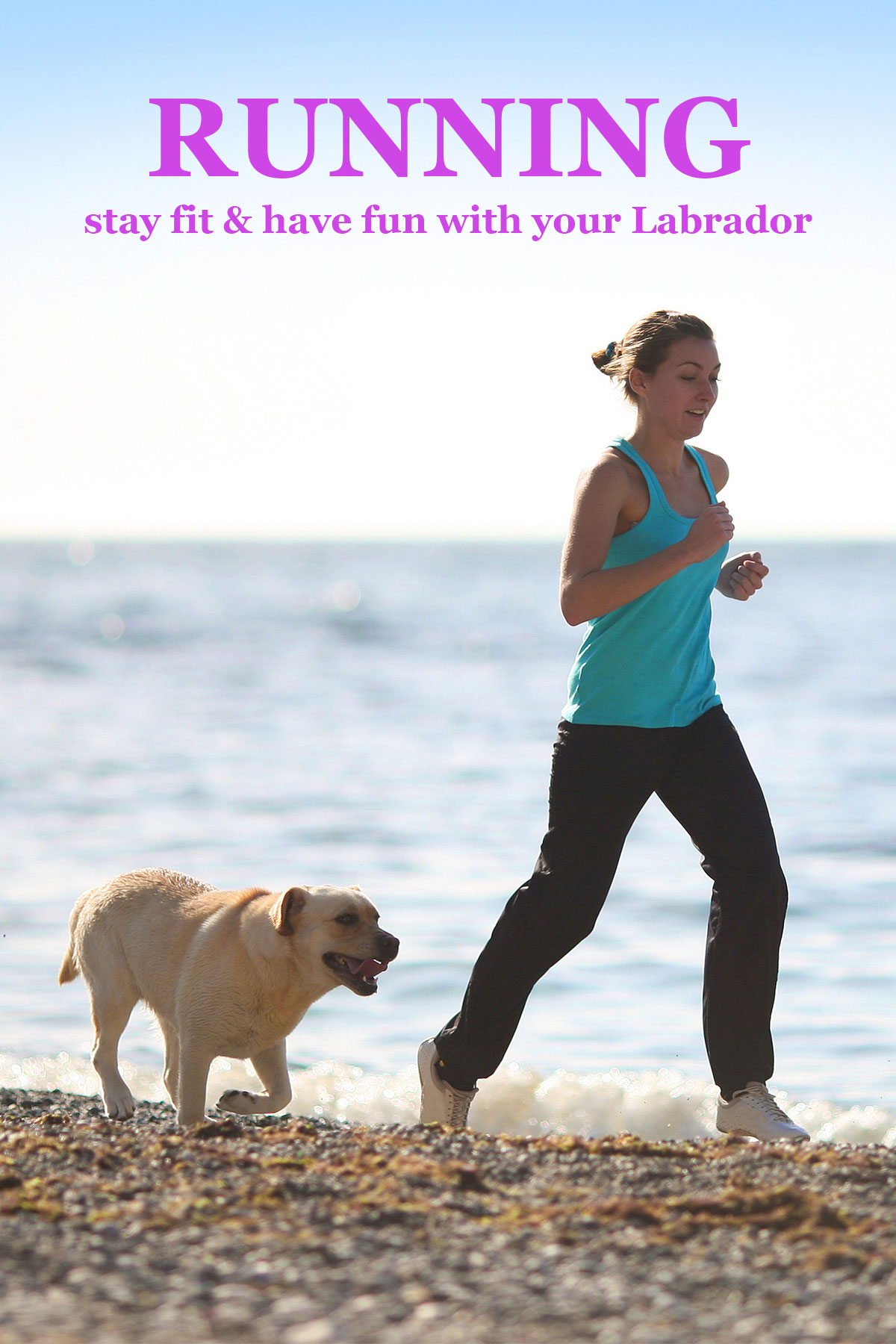 We take a look at whether Labs are good running companions, and give you all the information you will need to go running with your dog