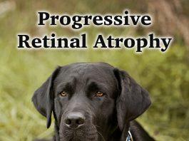 progressive retinal atrophy pra