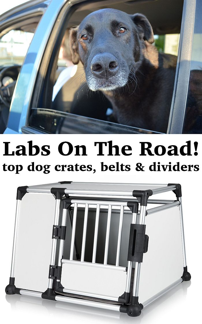 Magnificent Labrador Travel Car Crates Dog Dividers Seat Belts The Machost Co Dining Chair Design Ideas Machostcouk