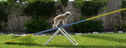 dog seesaw