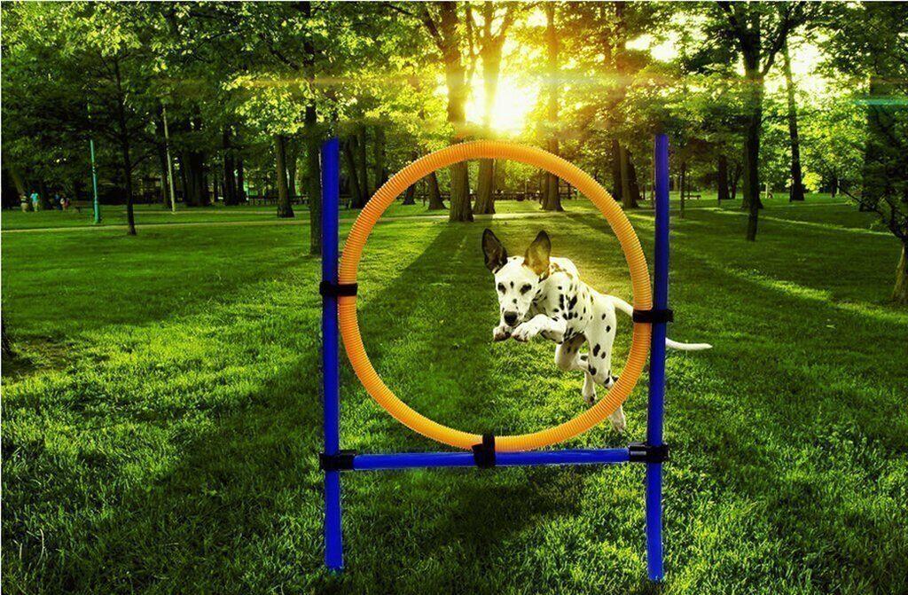 dog agility hoop