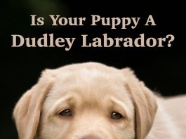 dudley lab