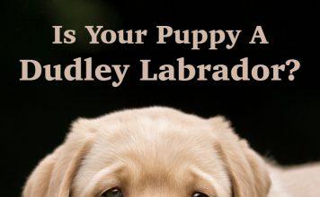 dudley lab