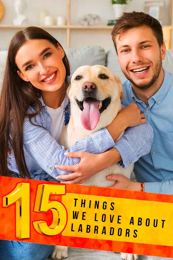 15 things we love about labradors