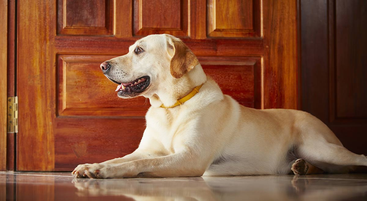 dog doors  the best dog flaps for labs