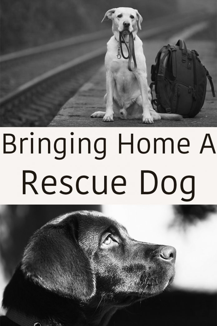 Helping you settle your rescue dog into his new home