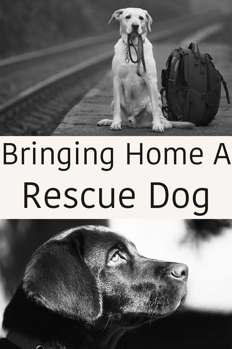 How To Get Your Dog Into Search And Rescue Training