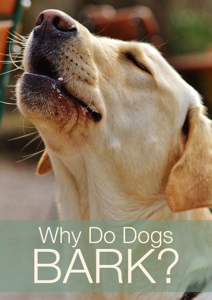 Why Does My Dog Bark So Much