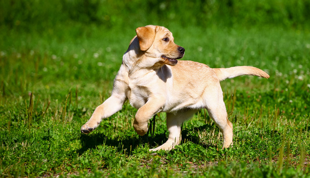 dog-training-tips-outdoors