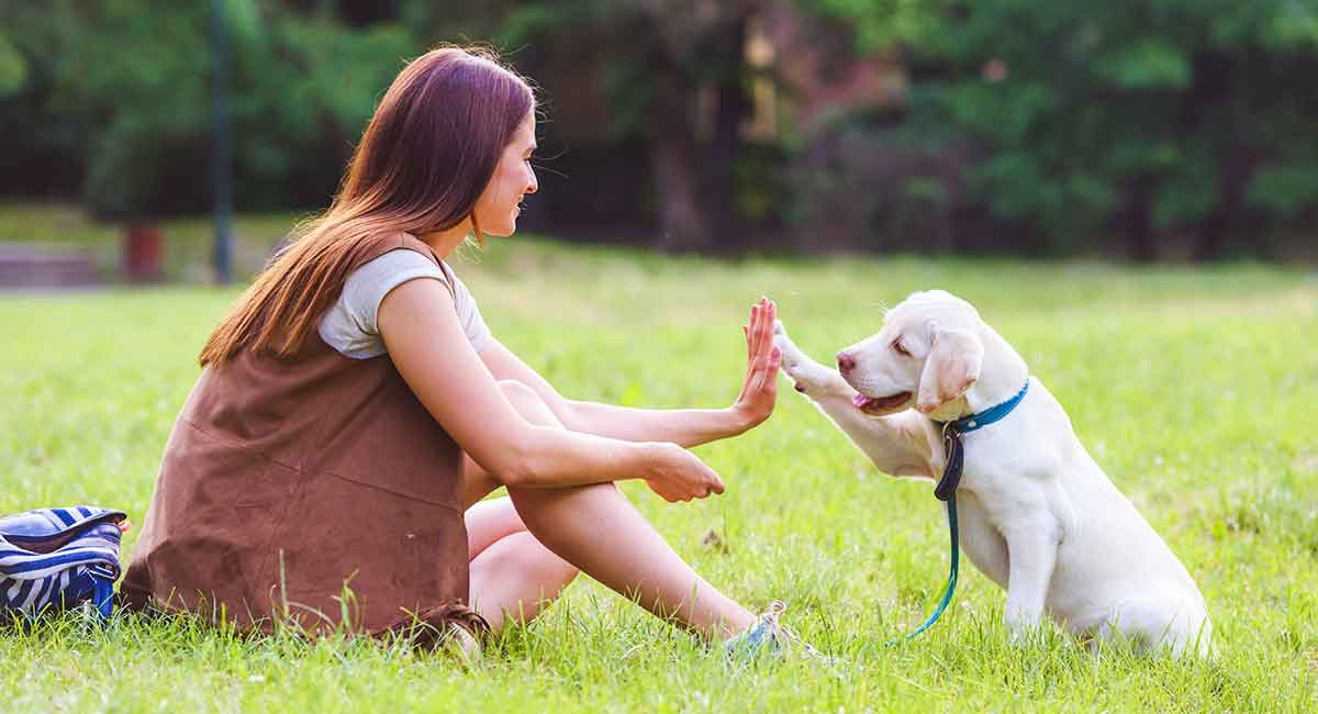 Dog Training Tips: 22 Great Ideas To Help You Train Your Lab in 2020