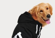 Big dogs like to be cosy too! We review a range of warm and fun sweaters for larger breeds