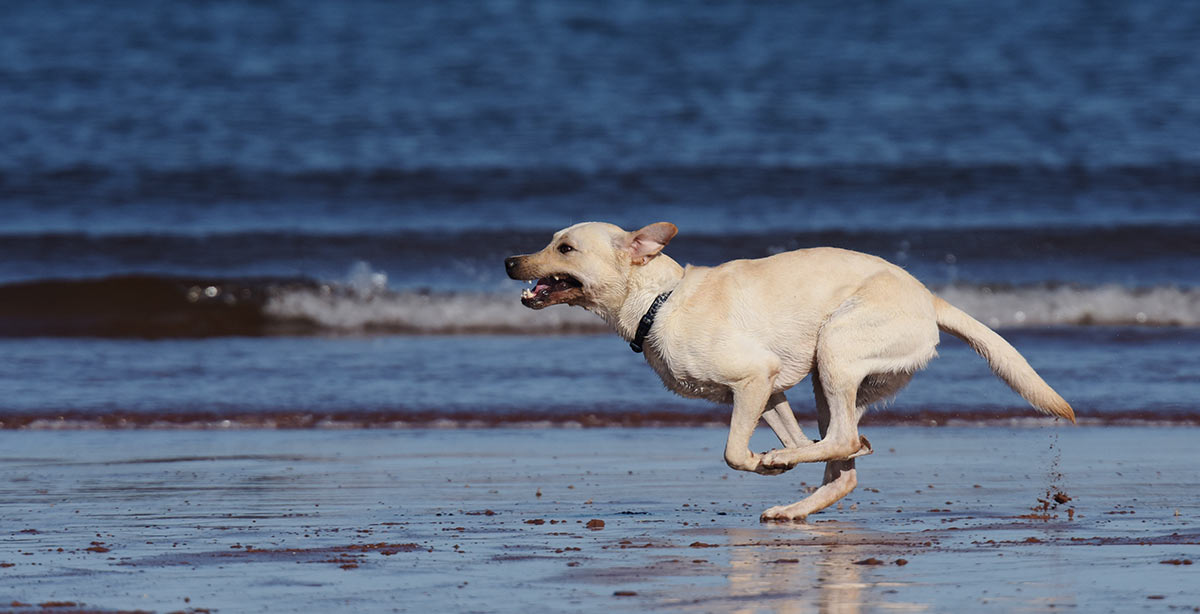 Training Your Dog Off Leash