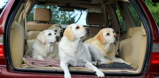 We help you make car travel fun for your dog