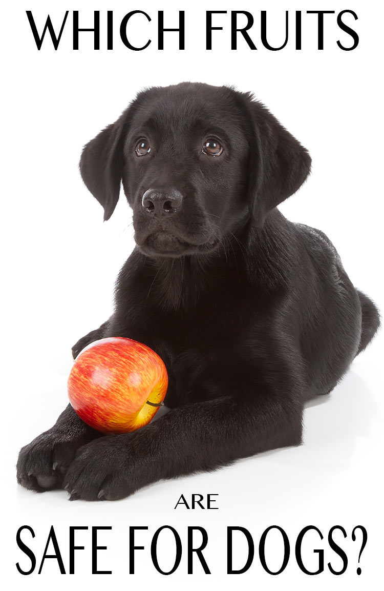 Can My Dog Have Apples
